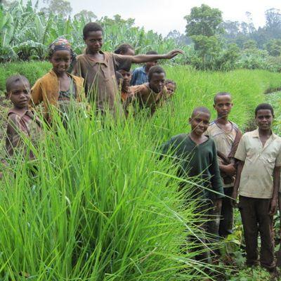 ethiopie-agro