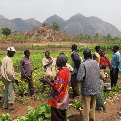 malawi-agro